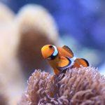 夏休み 家族旅行は関西の水族館で!子供に人気の水族館10選