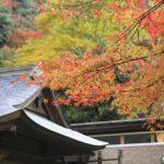 京都清水寺の紅葉と成就院庭園のライトアップを楽しむには?