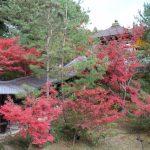 京都 高台寺の紅葉見ごろとライトアップを楽しむには?